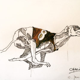 Greyhound Study 2. Racing Dog