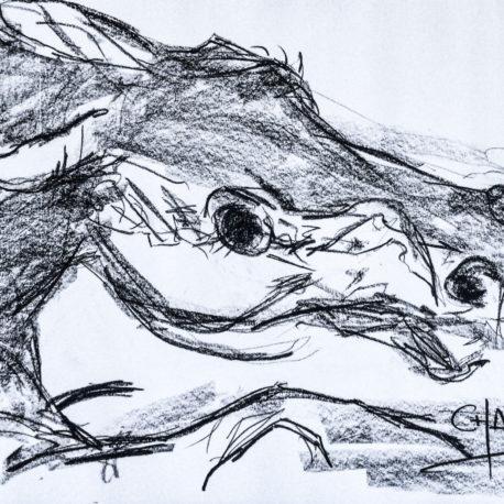 etude-horse-head-4-chakib-benkara-2016