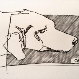 Labrador Study 2.